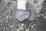 Found Heart: Log, Photo by Kelly